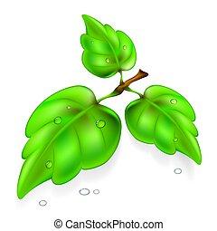 Leaf of the tree