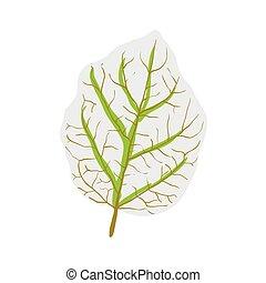 leaf of tree, vector illustration