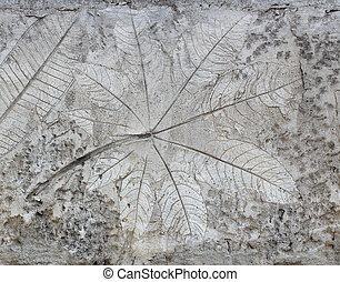 Leaf on cement texture background