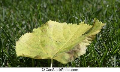 Leaf on grass close up