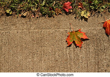 leaf on sidewalk - a fall leaf on a sidewalk.