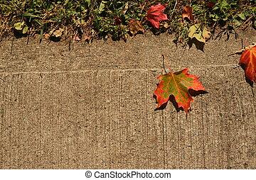 leaf on sidewalk - a fall leaf on a sidewalk.