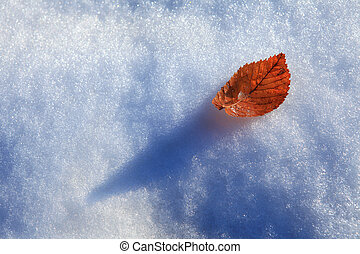 Leaf on snow.