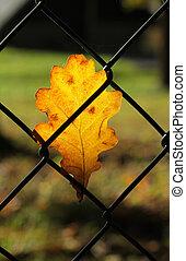 leaf on the fence