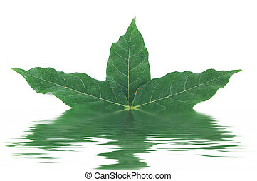 Leaf on the white background