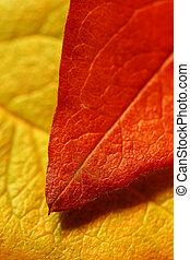 leaf over leaf