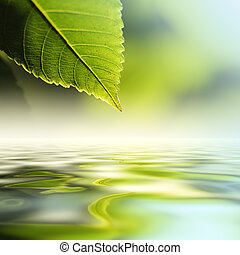 Leaf over water - Green leaf reflecting in river water,...