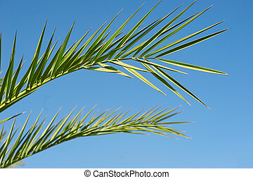 Leaf Palm sunday concept: Leaves frame of coconut branches with cloudy blue sky background