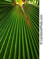 leaf-, palma, palmaceae
