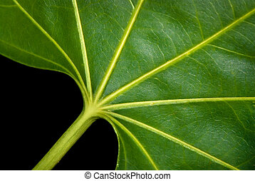 Leaf pattern and textures