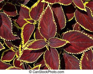 Leaf Pattern