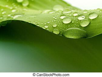 Leaf - Plant leaf