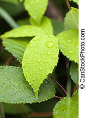 Leaf - rain drops - Leaf with rain drops in a macro shot