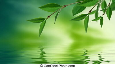Leaves reflecting in water
