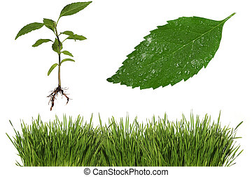 Leaf, Roots and Grass Elements - Green Elements of Nature:...