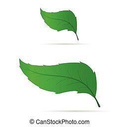 leaf set green design illustration on white