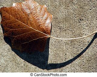 Leaf & Shadow