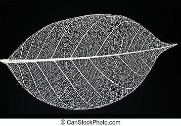 Fine details of a leaf skeleton