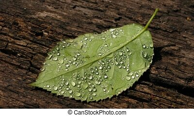 Leaf - Water-drops on leaf surface