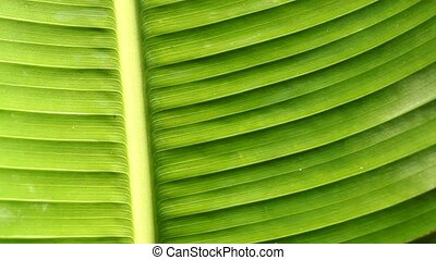 Leaf - Water drops on leaf surface