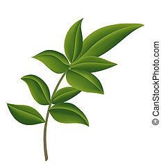 leaf - green leaf against a white background.