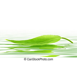 Leaf - Single green leaf over the water
