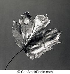 Leaf - Black and white leaf