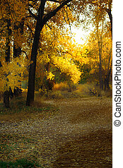 Leaf Strewn Path - Leaf strewn path through Fall foliage...