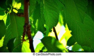 leaf sunlight ray 4k