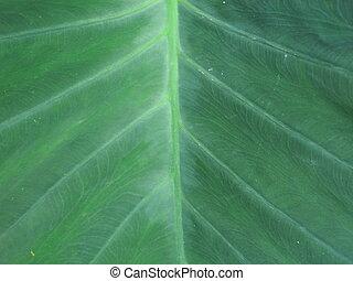 leaf texture background.