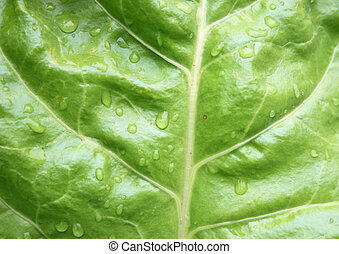 leaf texture - real natural green texture from the leaf