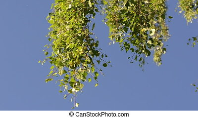 leaf tree branch sky