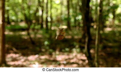 Leaf Twisting in the Wind
