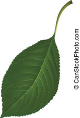 Leaf. Vector illustration