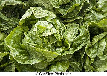 Leaf Vegetable - Lettuce - Leaf Vegetable - Organic Lettuce...