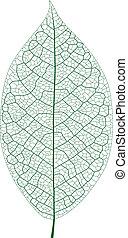 Leaf Vein - Layered Vector Illustration Of Leaf Vein.