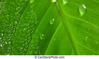 Water-drops on leaf surface