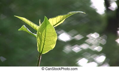 leaf wind - Wind in leaf