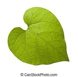 Leaf with Clipping Path
