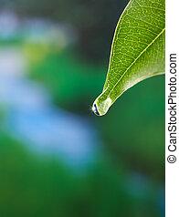 leaf with dewdrop