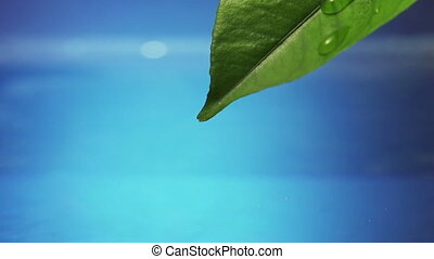 Leaf with drop of rain water with blue background