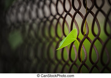 leaf with steel net