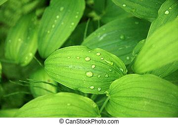 Leaf with Water Drop, Alaska, USA
