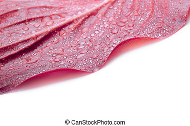 Leaf with water drops in coral pink color tone. Soft focus.