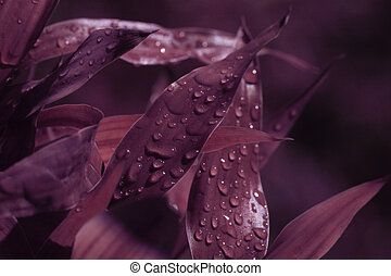 Leaf with waterdrops in deep violet color tone. Soft focus.