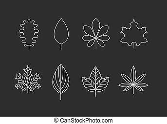 leaf(8).jpg
