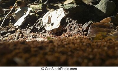 Leafcutter Ants, Costa Rica - Graded version. Watch also for...