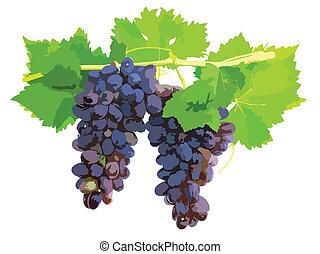 leafe, winorośl, trzcina, winogrono, czarnoskóry