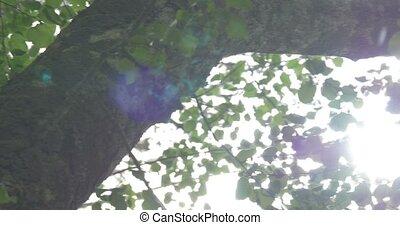 leafes, ветер, дерево, солнце