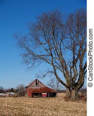leafless, árvore, antigas, maple, logo